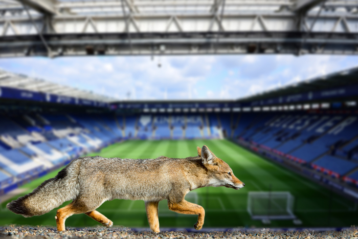 Leicester City FC are known as The Foxes